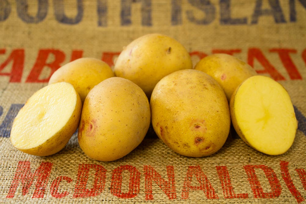 Chicago potato variety