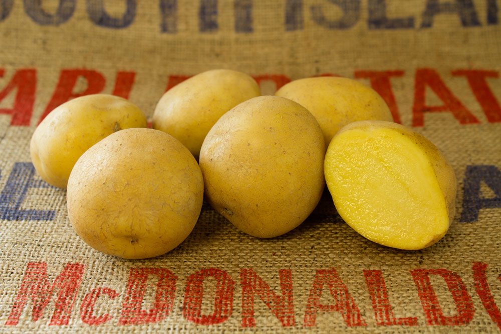 Colomba potato variety