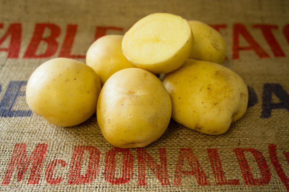 Endeavour potato variety