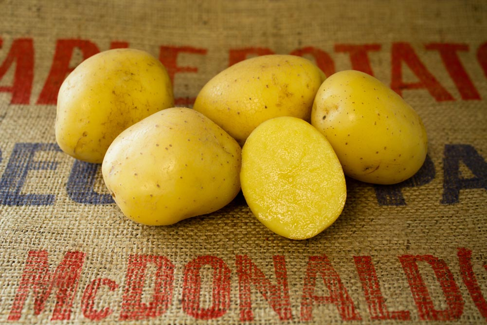 Francisca potato variety