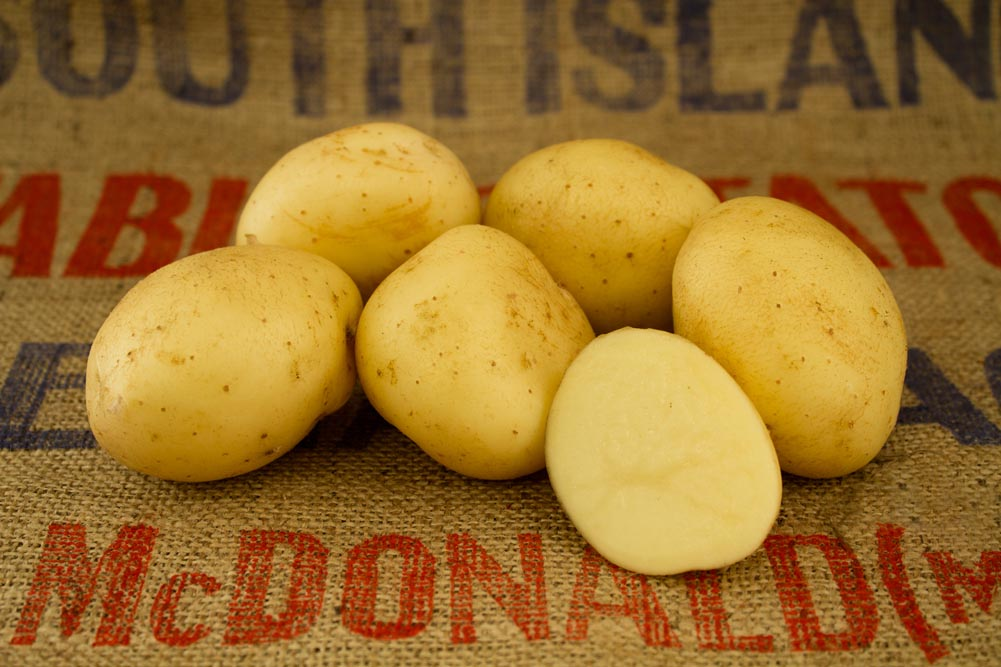 Sifra potato variety