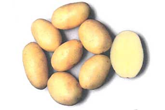 Vizelle potato variety
